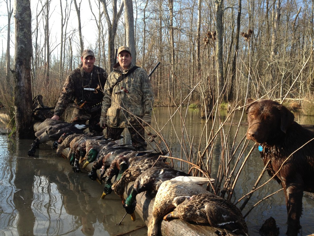 While Most Of The State Georgia Lacks Any Major Water Fowl Migration Fly Ways Ga Does Have A Healthy Local Potion Native Ducks Such As Wood